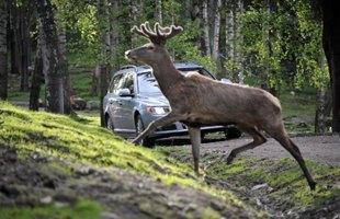 Twoje auto to jeżdżąca trumna?